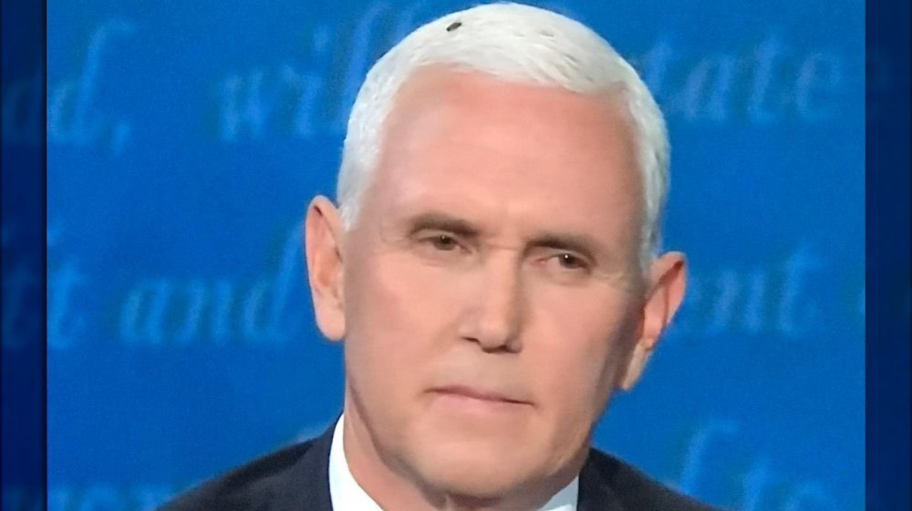 A fly in Mike Pence's hair at the VP debate