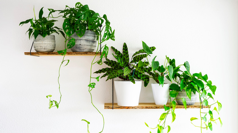 Variety of houseplants
