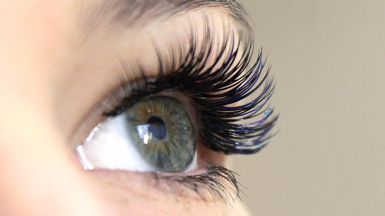 Eyelashes close-up