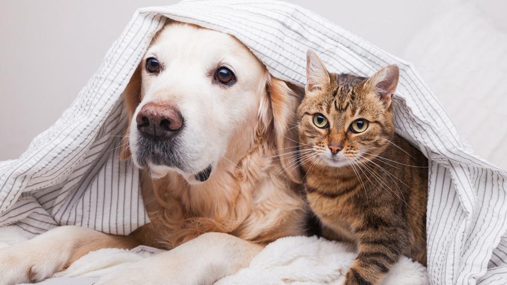 dog and cat cuddling under a blanket
