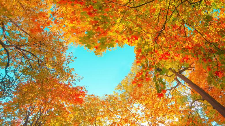sky heart in fall trees
