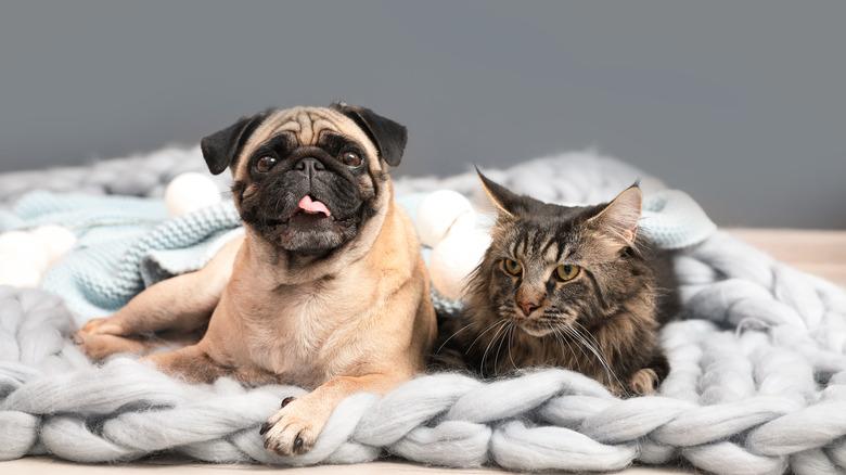 Cat dog together