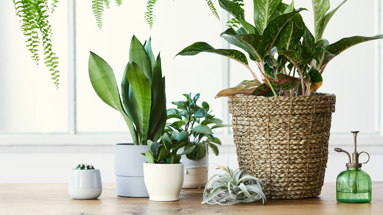A series of house plants