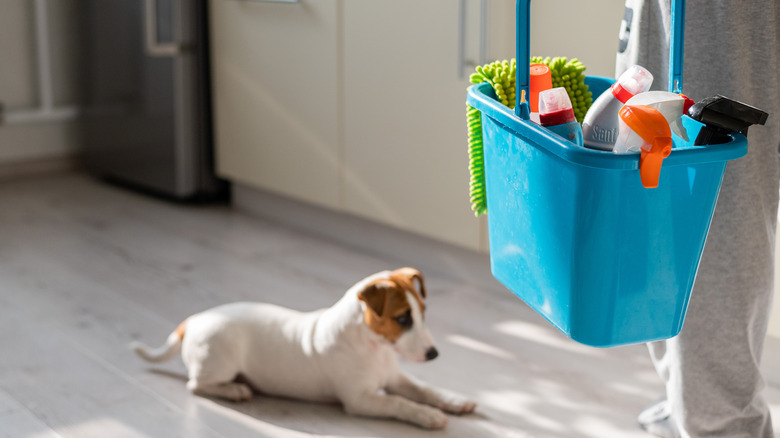 Jack Russell with cleaning supplies