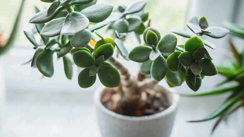 Houseplant sitting in gray pot