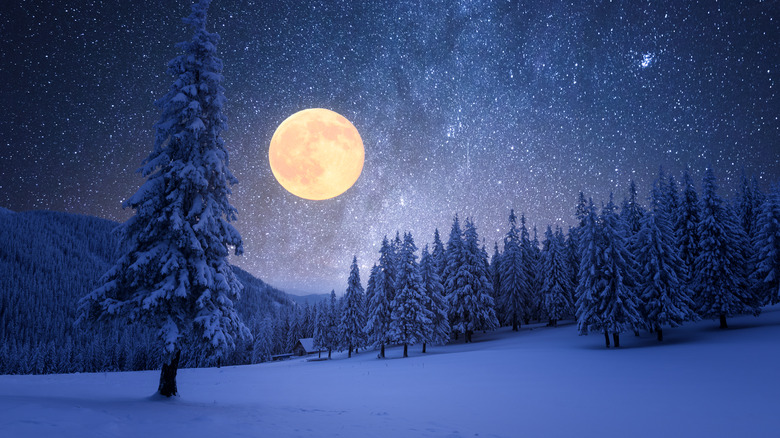 Full moon over pine trees and snow