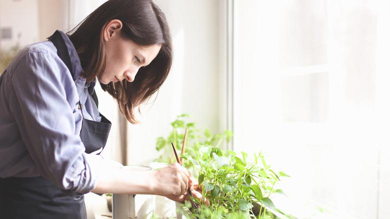 Woman working at an indoor garden
