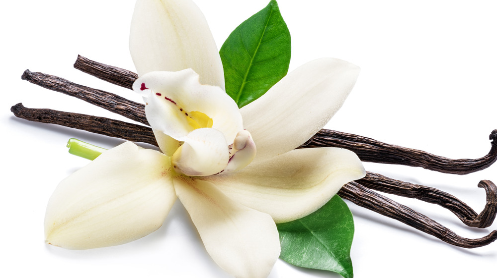 Vanilla plant with an all white background