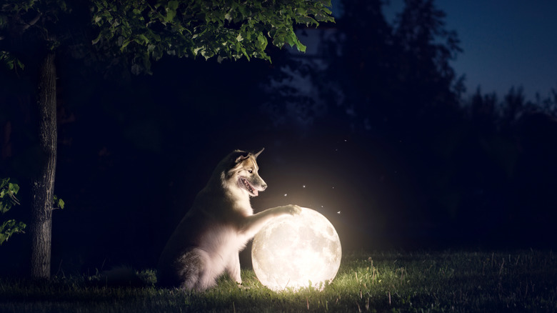 Smiling wolf with full moon