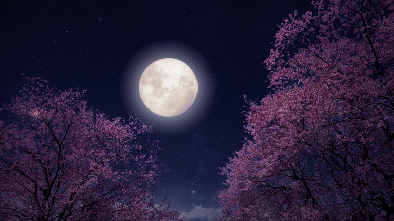 A full moon in the sky.