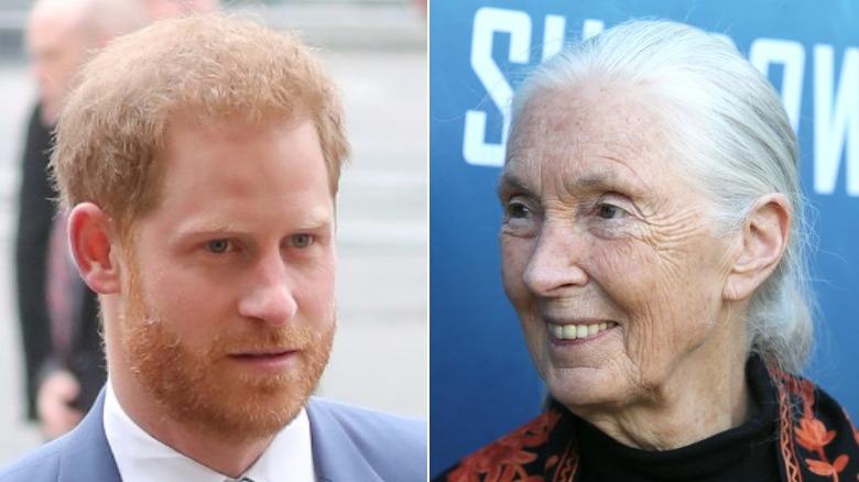 Prince Harry, Jane Goodall
