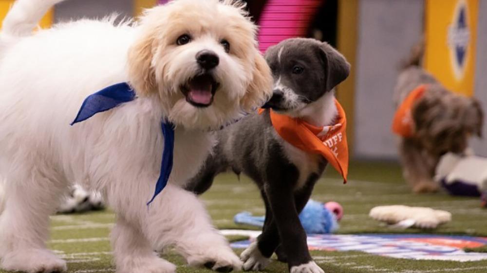 Puppy Bowl XVI participants