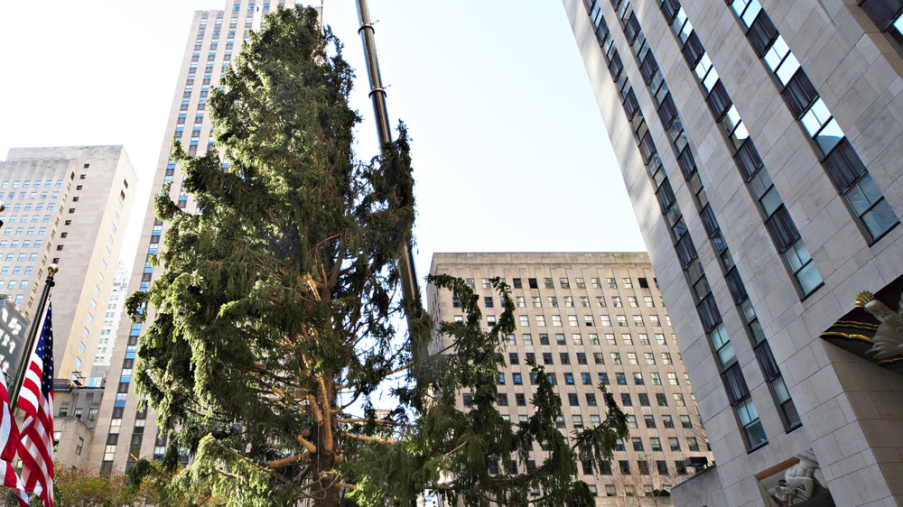 The 2020 Rockefeller Center Christmas tree is put in place