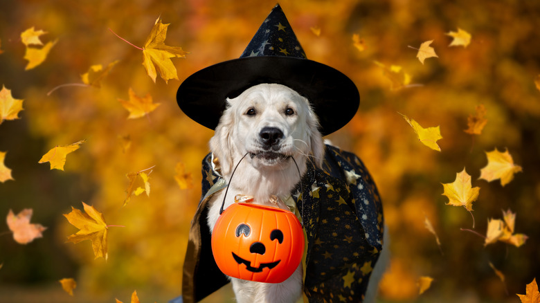 Dog carrying candy basket on Halloween
