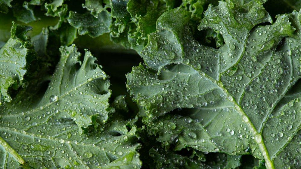 a close up of kale