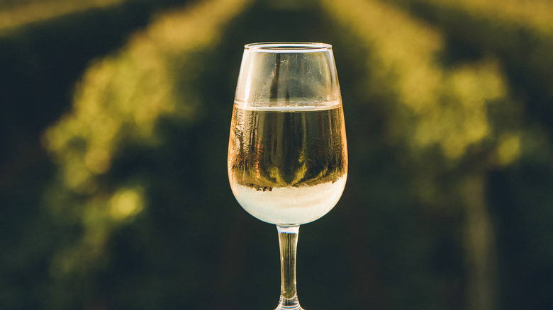 A glass of white wine in front of a vineyard