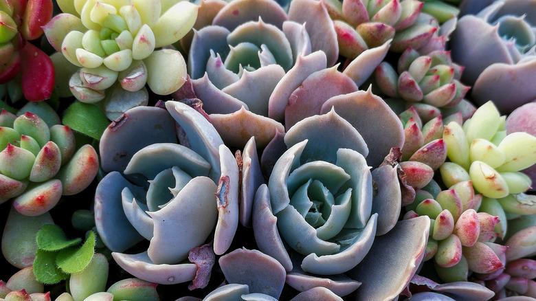 Up close shot of succulent arrangement