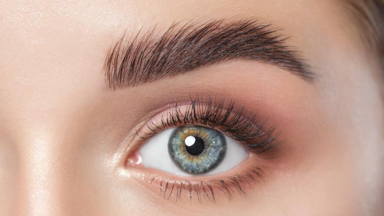 Closeup of an eye and eyebrow