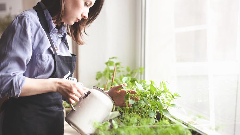 A woman tending to an indoor garden