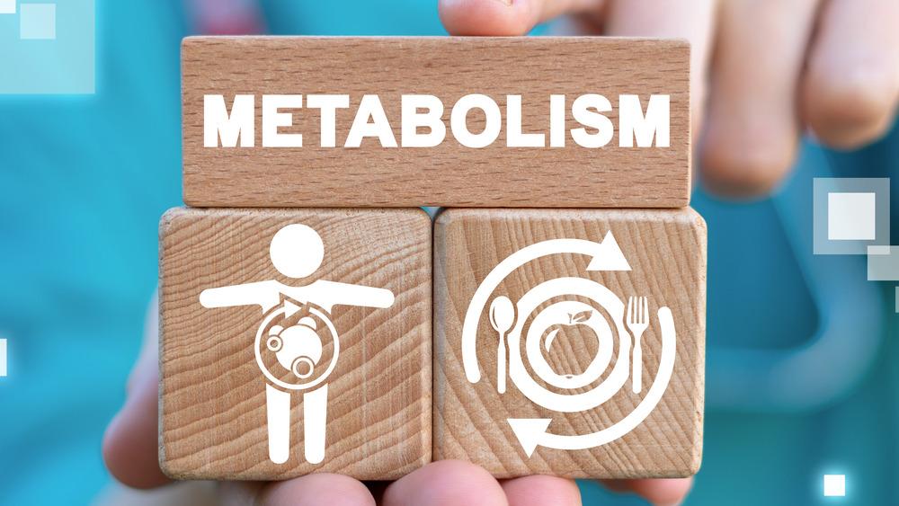 Blocks explaining metabolism