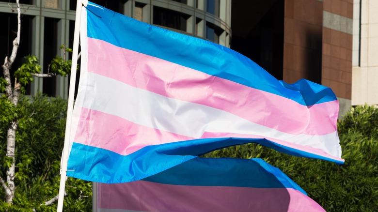 The trans pride flag