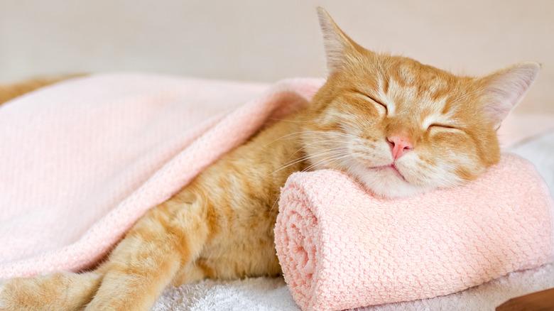 cat sleeping in spa bed