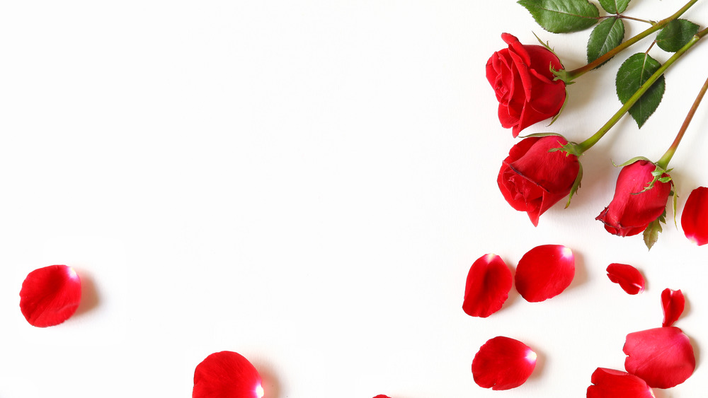 Red roses and petals on a white background