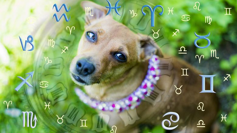 Dog in zodiac wheel