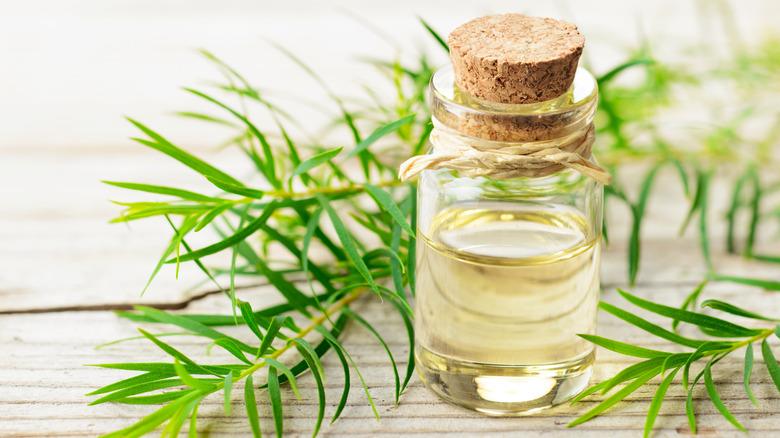 Tee tree oil in bottle