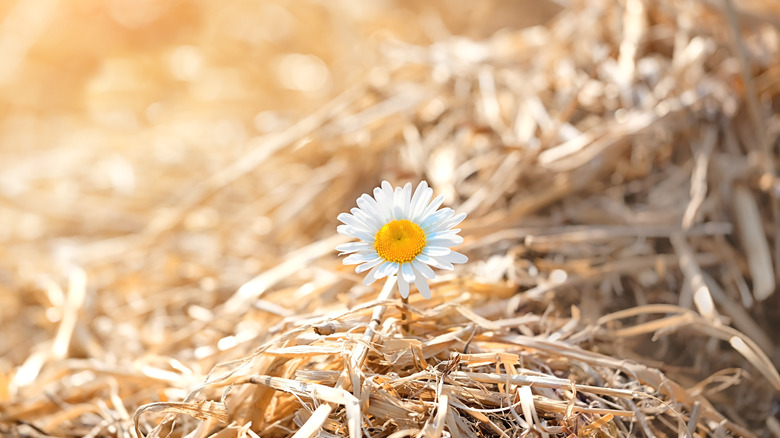 A while flower on a sunny day.