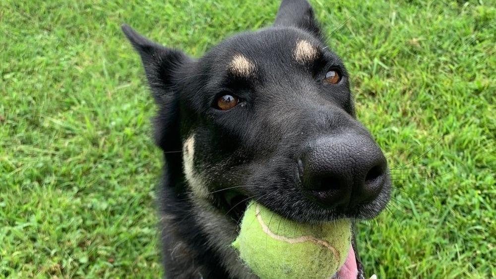 Major Biden with a tennis ball