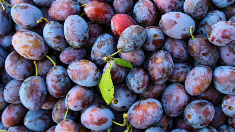 A pile of fresh plums