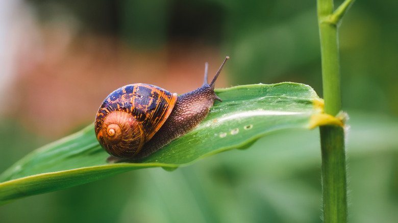 a small brown snail on a leaf