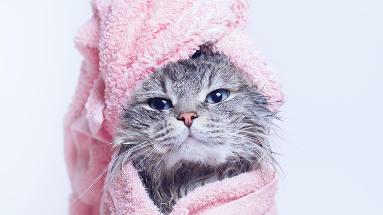 cat wearing a pink towel on its head